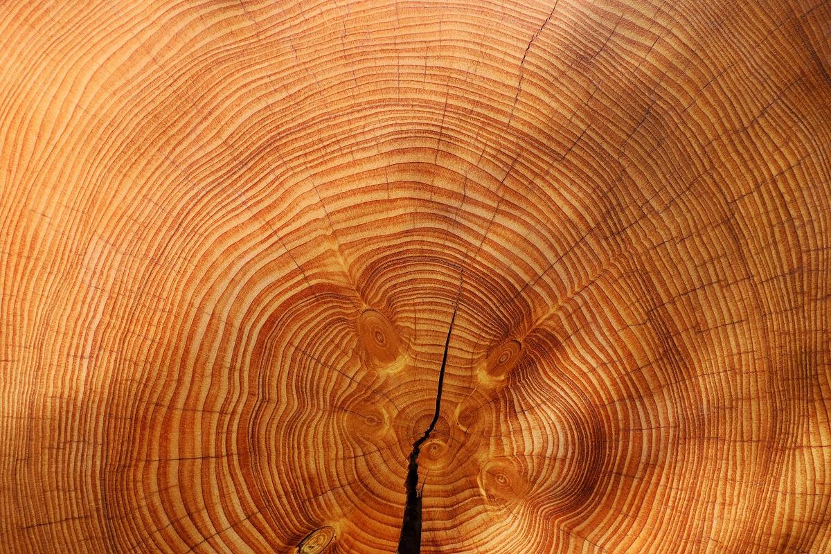 Une visite culturelle autour du bois à partager en groupe
